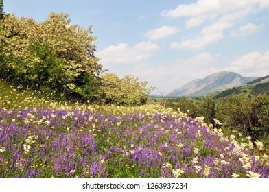 Sunny june day in alba county,romania