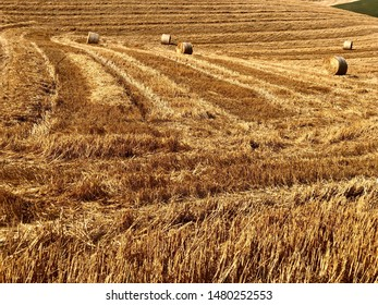 sunny lands in Tuscany with fields of wheat in the summer