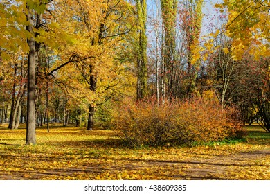 sunny landscape in the park in october