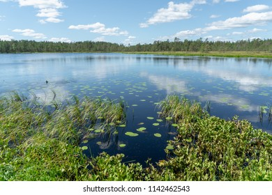 Sunny landscape view of a forest pond in Finland