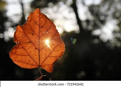 Sunny leaf.