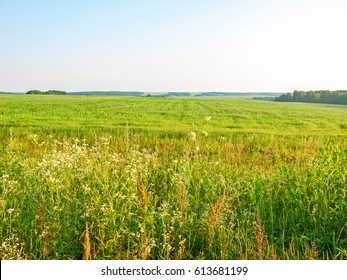 Sunny meadow with blossom flowers. Kaluzhsky region, Russia.