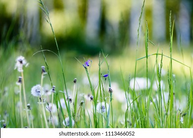 sunny meadow with dandellions and daisies in summer at countryside