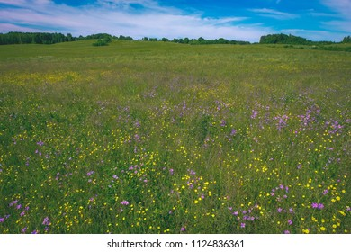 sunny meadow with dandellions and daisies in summer at countryside - vintage retro look
