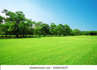 Sunny Meadow with green grass and large trees in the park.