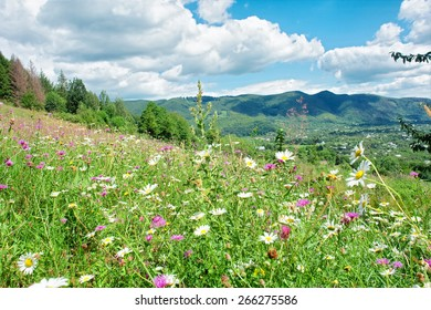 Sunny meadow with wild flowers - sunny day