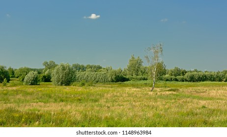 Sunny meadows with trees under a clear blue sky in Kalkense Meersen nature reserve in Scheldt estuary, Flanders, Belgium. Part of the Sigmaplan which protects Flanders from flooding.