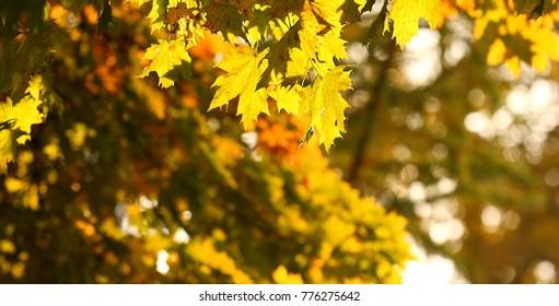 Sunny morning ,autumn leaf on park background.