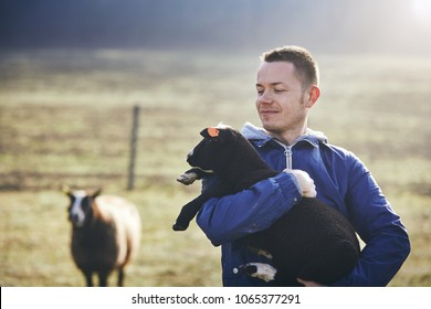 Sunny morning on the rural farm. Young farmer holding lamb against sheep and pasture.