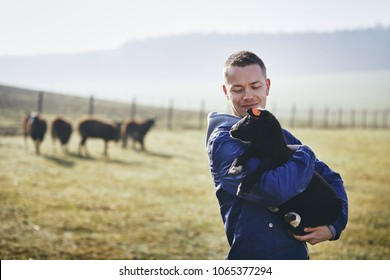Sunny morning on the rural farm. Young farmer holding lamb against pasture with herd of sheep