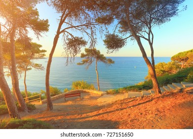 Sunny morning on spanish costa dorada beach. South pine trees on sea background. Nature of coastline of Salou resort.