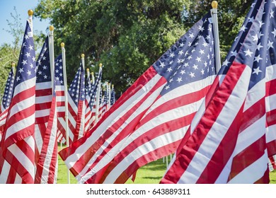 Sunny morning view of Sea of America Flags