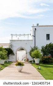 A sunny morning for a wedding in Puglia, southern Italy. Event celebrated in a Masseria, a rustic farm surrounded by greenery.