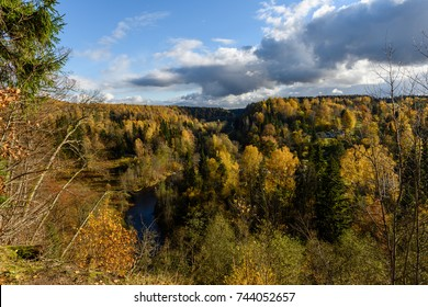 sunny morning in the woods. forest with tree trunks, sun and rays of light. panoramic view of autumn forest