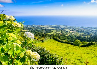 Sunny mountain and ocean landscape with hortensia's, Azores, Portugal, Europe