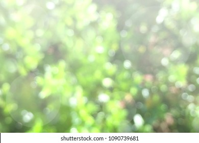 Sunny Nature Blur Background for nature related concept
