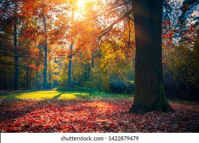 Sonnige Eiche im Herbstwald
