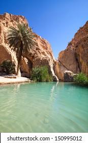 Sunny oasis in desert