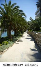 Sunny palm grove view. blue sky and blue sea