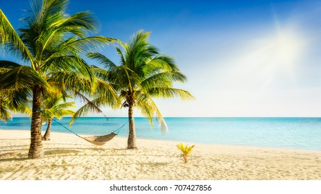 Sunny paradise beach with palm trees and traditional braided hammock