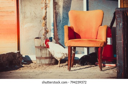 A sunny photo of an angry cock watching behind of an abandoned orange chair on a small street in Istanbul, Turkey