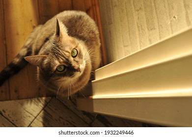 Sunny photo of a gray striped cat with green eyes with space for your text.