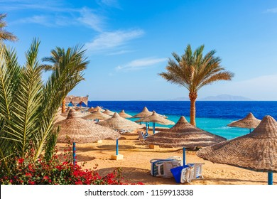 Sunny resort beach with palm tree at the coast shore of Red Sea in Sharm el Sheikh, Sinai, Egypt, Asia in summer hot. Bright sunny light