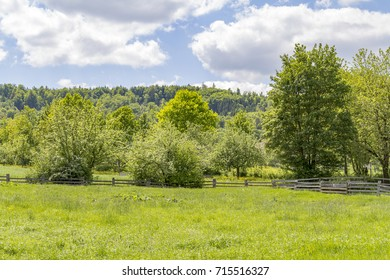 sunny rural scenery around a meadow at spring time