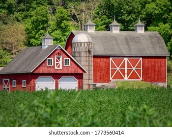 A sunny scenery of a farm territory with two barns