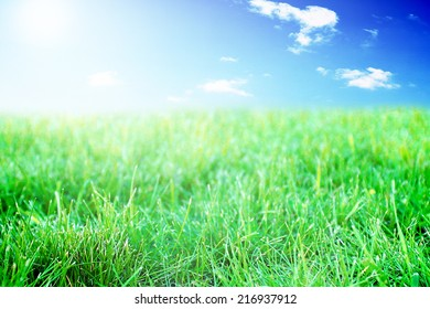 Sunny seasonal grass meadow