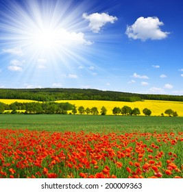 Sunny sky above the spring landscape with poppy field