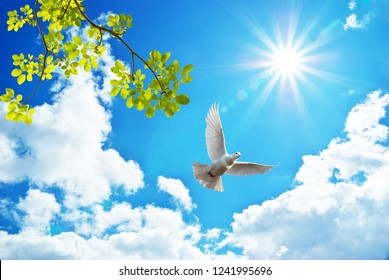 sunny sky background with spring branches and dove
