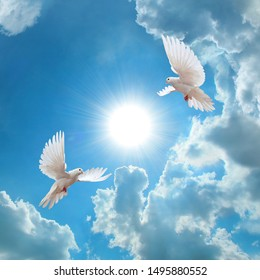 sunny sky and flying doves