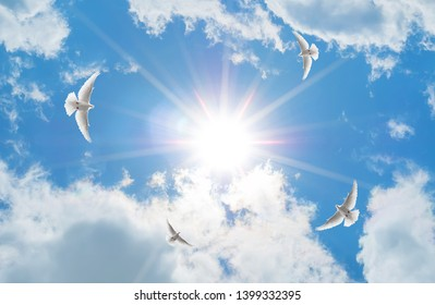 a sunny sky and flying pigeons