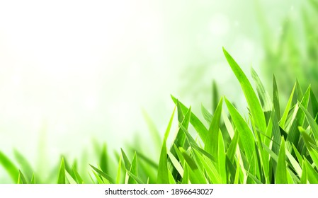 Sunny spring background with green grass. Horizontal summer banner with copy space for text