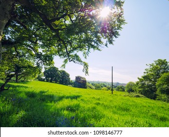 Sunny spring countryside,Northern Ireland