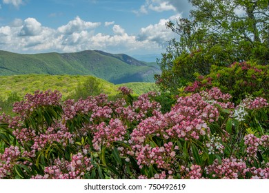 Sunny Spring Day on Siler Bald in Blue Ridge Mountains