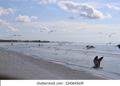Sunny Summer day at the beach in Sarasota, Florida
