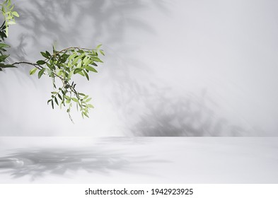 Sunny summer green leaves on branch with shadow on wall, floor in sunlight, copy space. - Shutterstock ID 1942923925