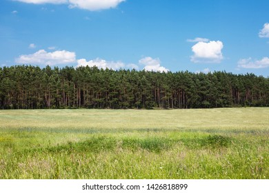 Sunny summer landscape. Blue sky, green field and forest background.