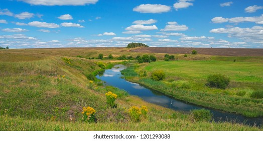 Sunny summer landscape with river curve and growing on the riverbank yellow blooming flowers of solidago virgaurea(european goldenrod or woundwort).Beautiful view of fields,meadows,pastures and woods.