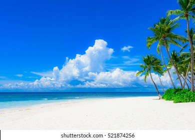 sunny summer landscape waterfront seashore overlooking the palm tree