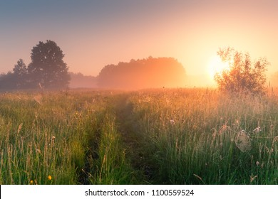 Sunny summer morning. Beautiful meadow with mist. Path in field with wildflowers. Foggy nature.