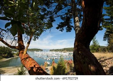 A sunny summer morning in Roche Harbor on San Juan Island, Washington.