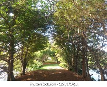 Sunny tree lined path