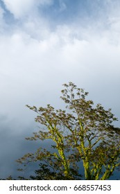 sunny tree over thunderstorm clouds