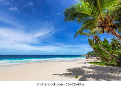 Sunny tropical beach with palm and turquoise sea.  Summer vacation and tropical beach concept.