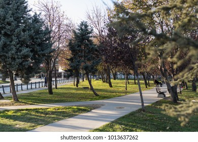 sunny weather in the park. a walkway between neat lawns and trees. The setting sun illuminates the street from the side