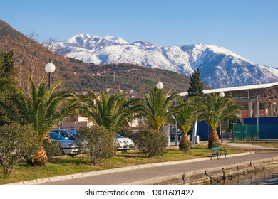 Sunny winter day. Montenegro, Tivat. View of green embankment in Seljanovo village and snow-capped Lovcen mountains