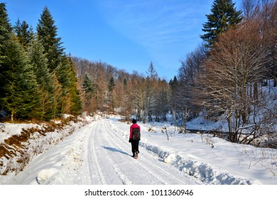 Sunny winter day with woman walks through the snowy landscape